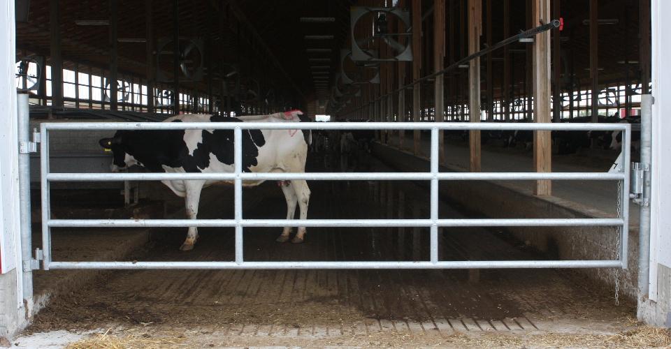 Steinway Barn Gates