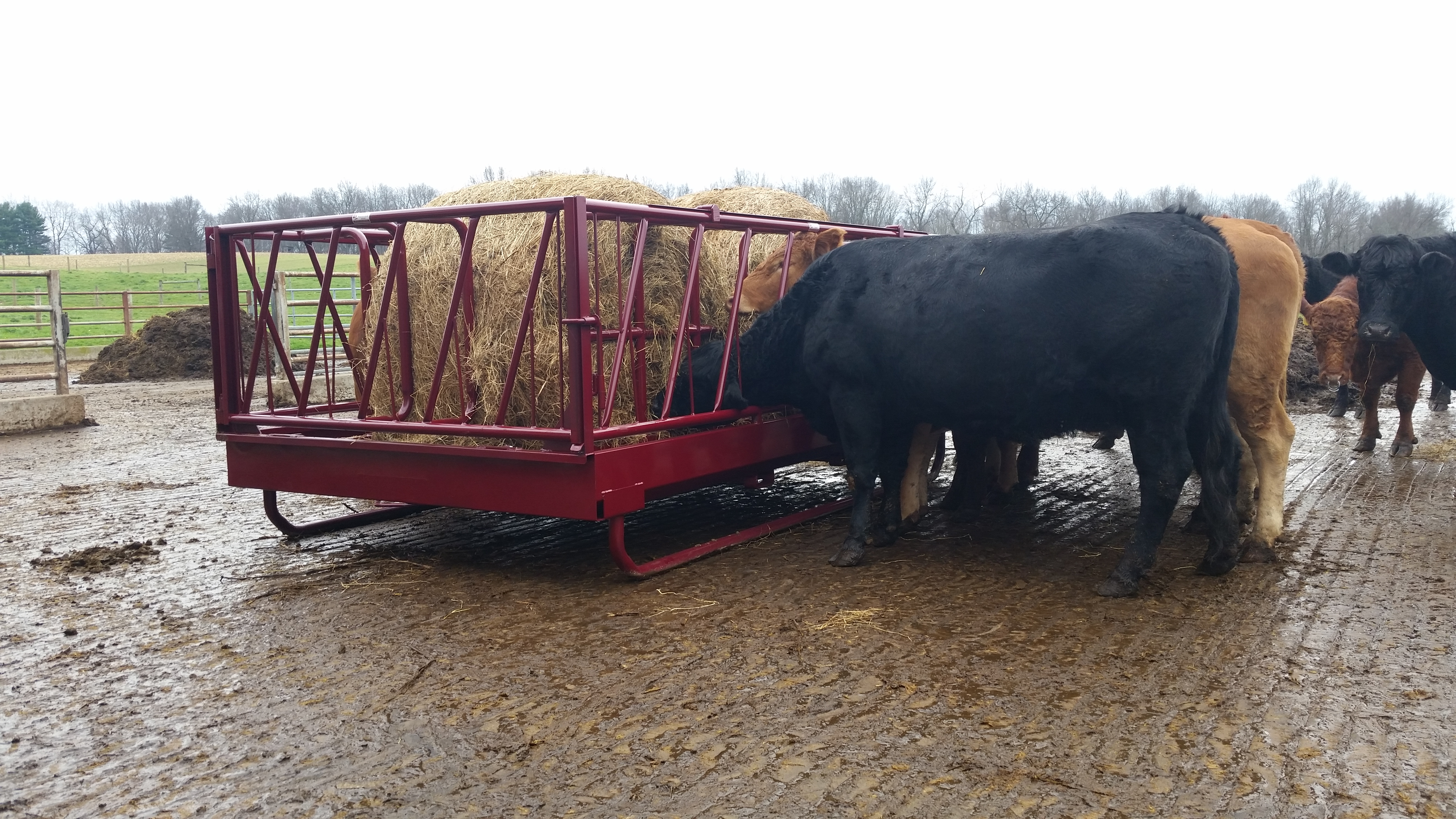feeder equipment bale steinway cows boss for hay