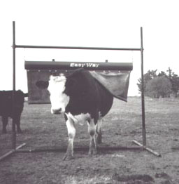 Steinway Equipment – Easy Way Cattle Care