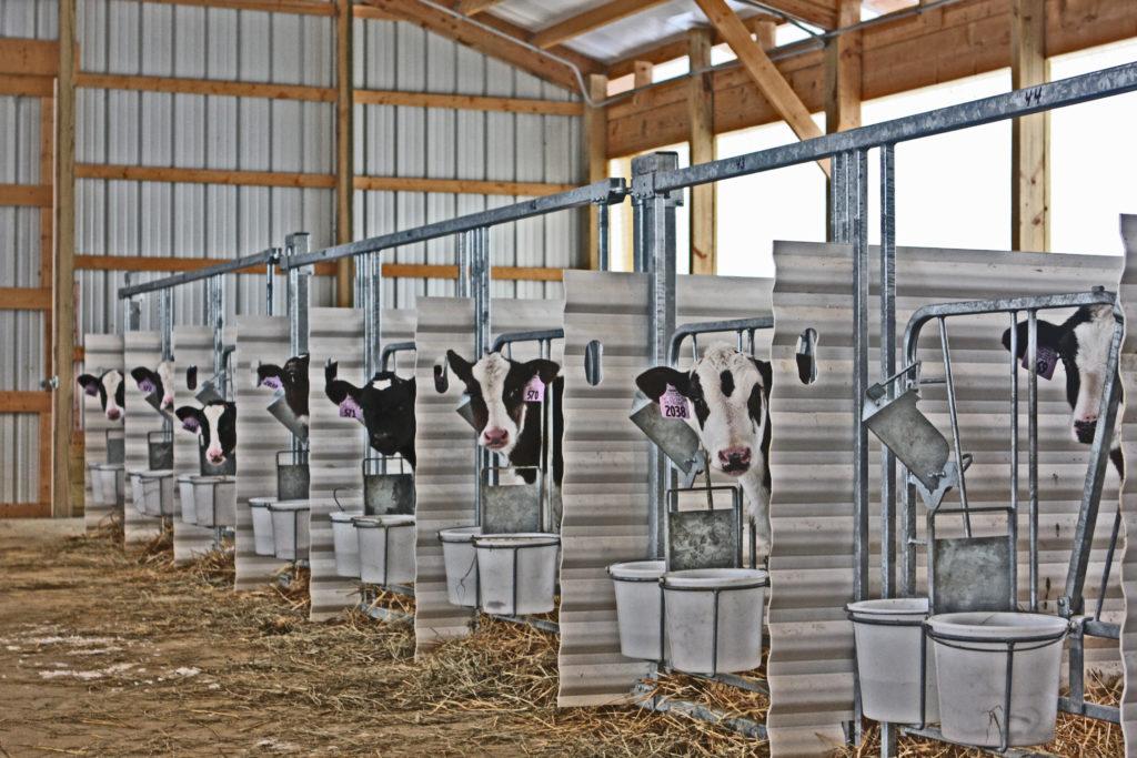 Calf Nursery System